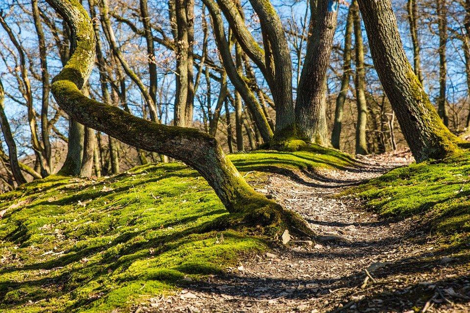 Antrag Mitgliedschaft bei Naturpark Augsburg – Westliche Wälder e.V.