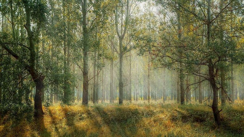 Antrag 1000 Klimabäume pflanzen